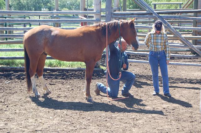 horsemanship_clinics8