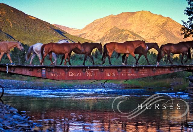 horses-main