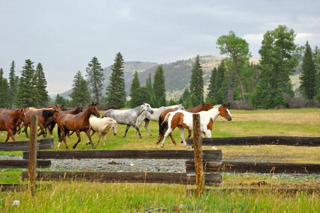 horses_montana11
