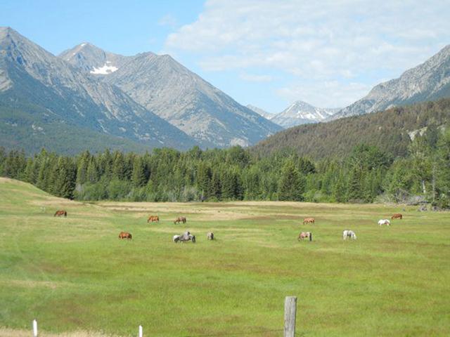 horses_montana12