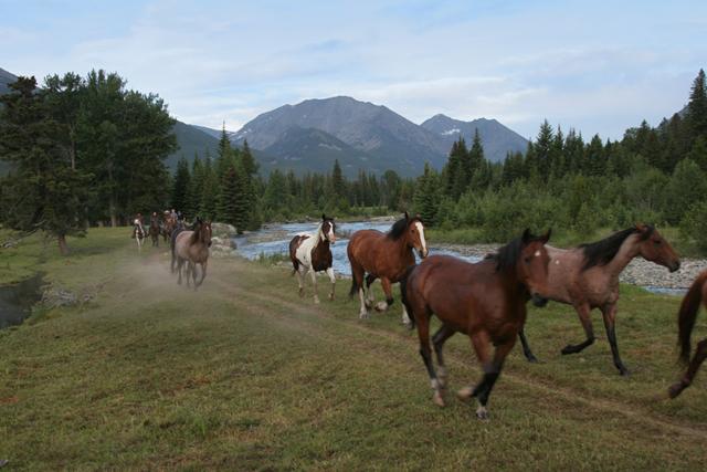 horses_montana7