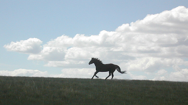 horses_montana8