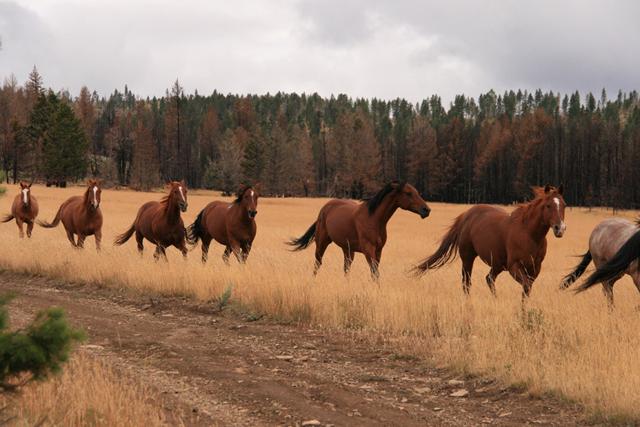 horses_montana9