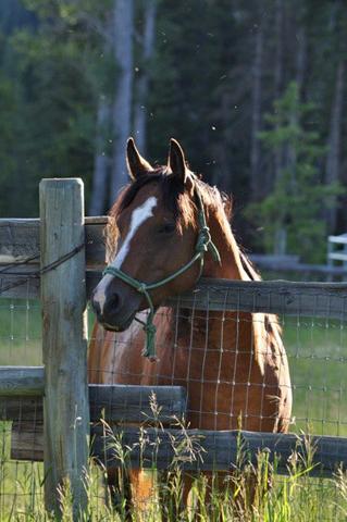 horses_montana_mt