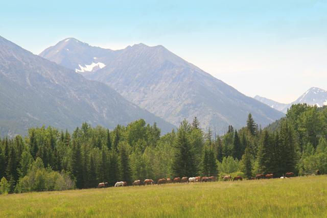 horses_montana_sweet_grass_ranch