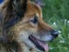 Barney_dog_Sweet_Grass_Ranch