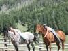dude_ranch_riding_horses_montana
