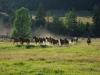 montana_dude_ranch_horses