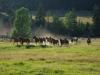 montana_dude_ranch_horses