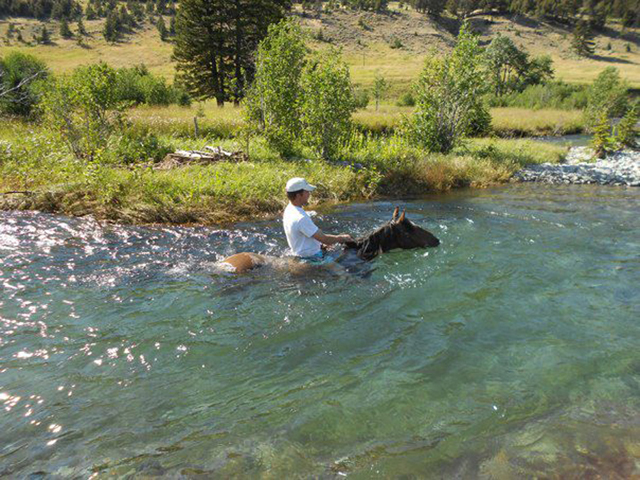 swimming_with_horses_mt