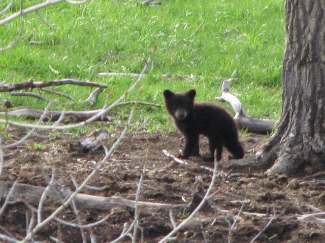 wildlife_in_montana