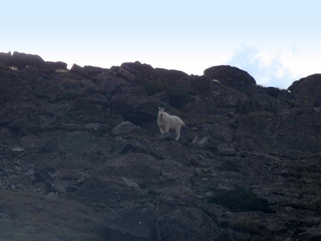wildlife_in_montana10