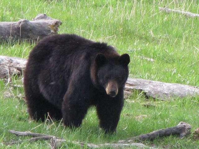 wildlife_in_montana6