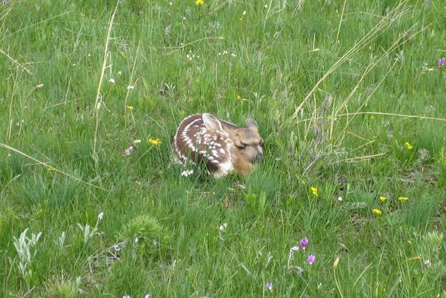 wildlife_in_montana8